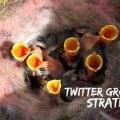 Tactics for growing your twitter account