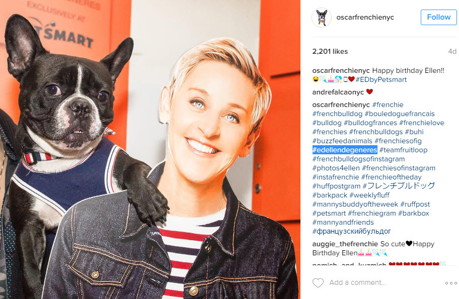 Using breed hashtags with your dog Instagram posts will get you more exposure on Instagram