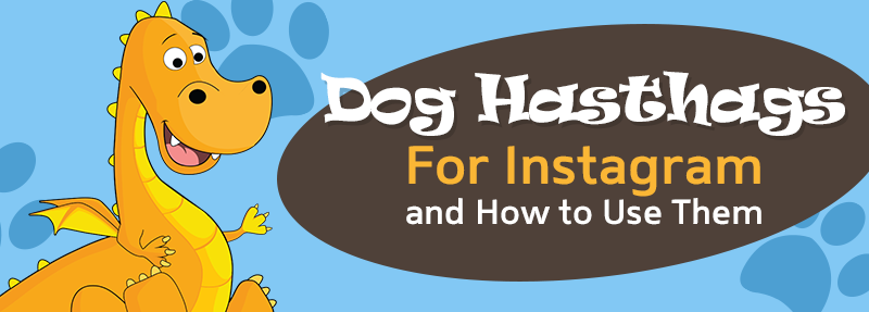 How to use dog hashtags on Instagram to get more likes and comments
