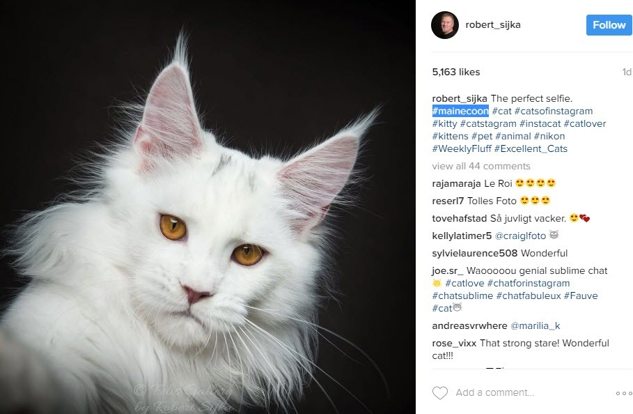 increase organic reach on cat instagram posts with breed cat hashtags