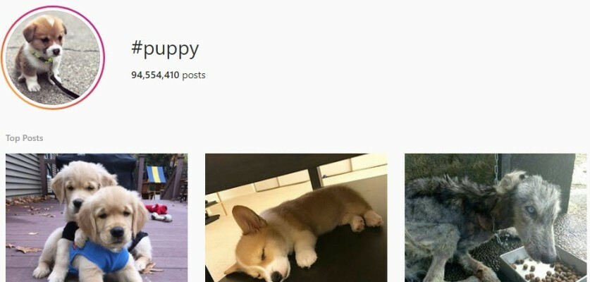 List of Puppy Hashtags